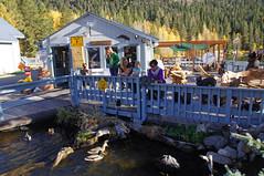 2011-10-15 10-23 Sierra Nevada 491 June Lake