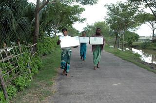 Bringing fingerlings to a pond, Bangladesh. Photo by WorldFish, 2008