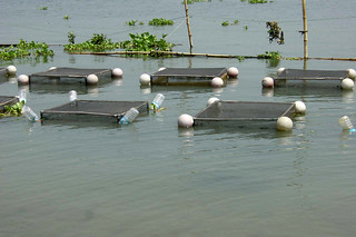 Fish cage cluster in river, Bangladesh. Photo by WorldFish, 2002