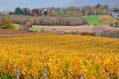 Paysage d'automne ~ Fall landscape (Michele*mp slowly catching up) Tags: november trees france nature colors yellow jaune automne landscape geotagged europe novembre couleurs arbres vineyards savoie paysage vignes vignoble frenchalps rhnealpes myans bej combedesavoie alpesdunord fleursetpaysages vinsdesavoie chambery geo:lat=4551656536108677 geo:lon=5984339720870935
