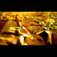 Autumn leaf colors season (Zed The Dragon) Tags: november autumn tree green nature clouds automne french geotagged effects photography photo flickr novembre view minolta photos sony images vert best full fave most frame getty faves 100 fullframe alpha antony paysage leafs arbre parc postproduction paysages franais 92 zed gettyimages francais feuille sceaux lightroom effets parcdesceaux favoris 24x36 0sec 100faves a850 sonyalpha hpexif concordians 100commentgroup 100comment dslra850 doubleniceshot alpha850 zedthedragon 100coms hautsseine artistoftheyearlevel2
