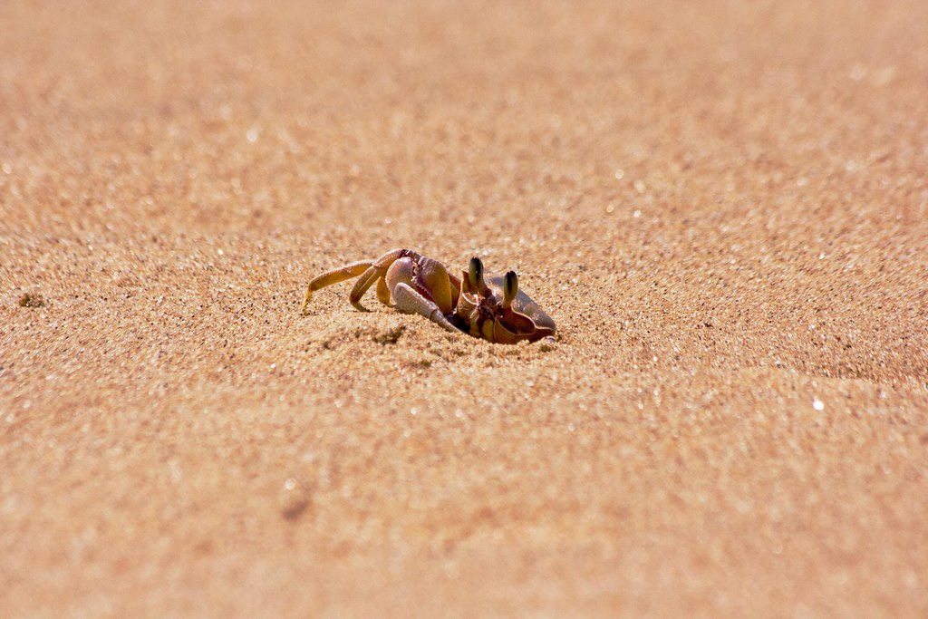 Crabs at the beach, not as easy as one might think