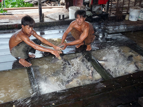 Fish farmers operating cage culture, Cambodia. Photo by O. Joffre, 2010