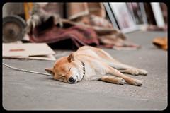 _DSC3214 (dk73) Tags: paris streetphotography parigi d700