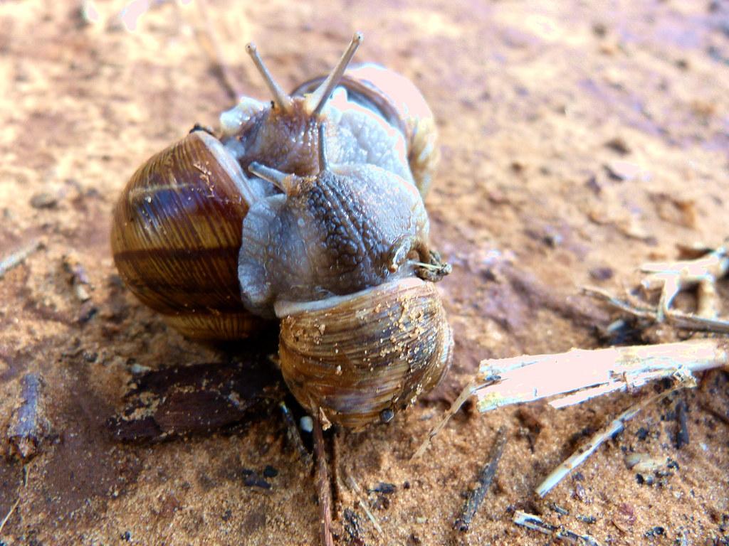 05-11-2011-snails-wasisdas