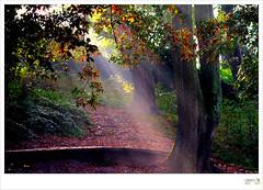 DSC_4784 sun rays from Central Park Plymouth (bao7555) Tags: park city uk sunset sea england sky dog sun seascape flower tree water beautiful clouds sunrise ir cityscape plymouth devon lanscape