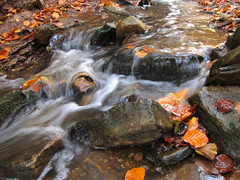 Powerful Fall Creek with tiny little Waterfalls (Batikart) Tags: longexposure autumn orange reflection fall nature water leaves yellow creek forest canon germany landscape geotagged deutschland buchenwald waterfall leaf wasser europa europe exposure wasserfall earth herbst natur foliage bach gelb ursula blatt landschaft wald bltter spiegelung beech silky sander g11 badenwrttemberg swabian langebelichtung 2011 100faves 50faves weinstadt aichwald strmpfelbach viewonblack batikart saariysqualitypictures canonpowershotg11 201111