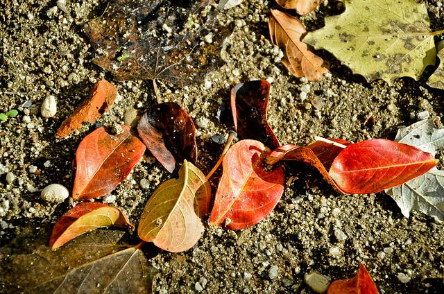 otoño 14