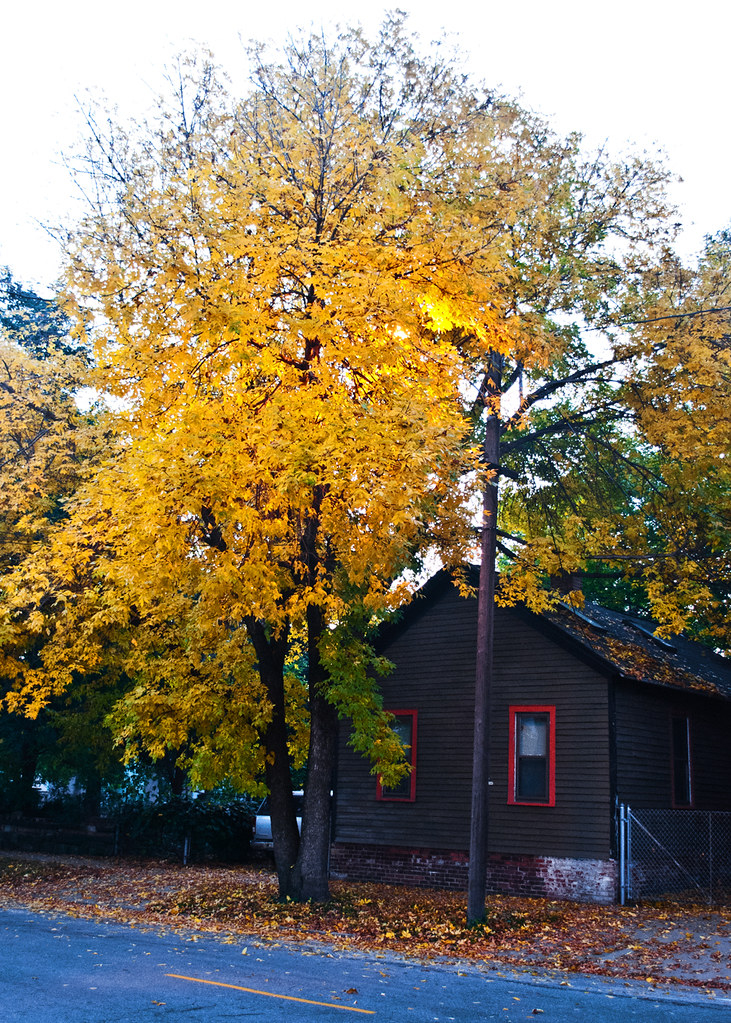 365-154 Leaves