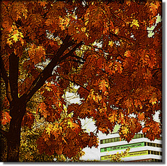 Autumn Folliage (Pifou 2010) Tags: city autumn light paris france tree art colors automne town couleurs arbres lumiere ville folliage 2011 feuillage vividimagination autumnfolliage awardtree vanagram gerardbeaulieu pifou2010 art2011 netartii