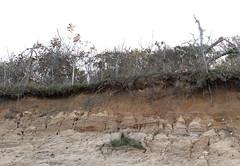 Coastal Bluff (sandy richard) Tags: longisland beaches wildwood wildwoodstatepark sandyrichard sandrarichard