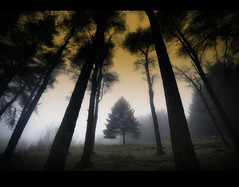 Forest Echoes (GaryHowells) Tags: trees fog forest conifer