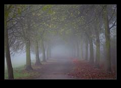 As I walked out one misty morning (Arie van Tilborg) Tags: november mist misty silence wandeling stilte broekpolder arievantilborg