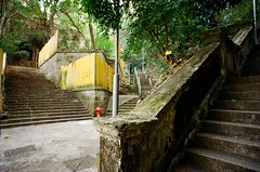 directions (kymak) Tags: urban tree green film landscape hongkong nikon stair steps ruin direction 20mm f80  hilly f28 slope wanchai topography kodak200 shipstreet    namkooterrace