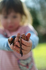 20th March - WILL she be frightened of worms? (Bond Girly) Tags: girl garden hands dof amy fear soil worm worms bought frightened handful