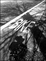 Phantom Photographer Phortunately Phound... (Oh Kaye) Tags: tree blackwhite shadows highcontrast picnik odc1 bikeland phantomphotographer tp138