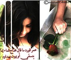 325334 (sawso0ona) Tags: عمر محتاج الورد للماء ماقال