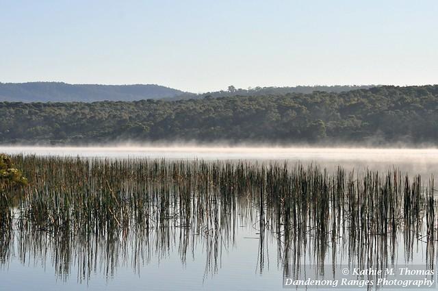 277-365 Morning mist