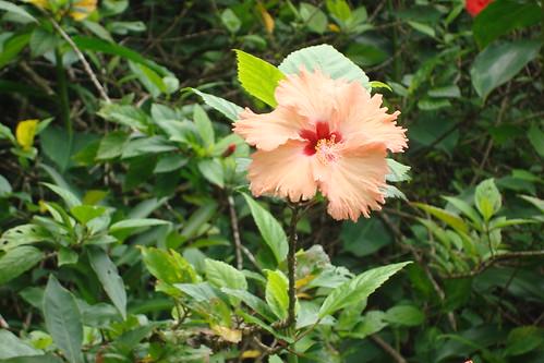 Ho'omaluhia Botanical Garden