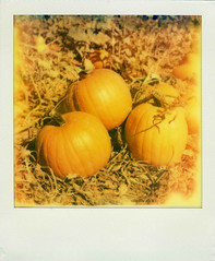 Pumpkins (Nick Leonard) Tags: vegas autumn orange fall film nature field analog polaroid sx70 outdoors three lasvegas nevada nick pumpkins sunny scan lightleaks pumpkinpatch landcamera polaroidsx70 polaroidcamera instantfilm epson4490 polaroidsx70landcamera firstflush colorshade integralfilm nickleonard polaroidsx70model2 theimpossibleproject ndpackfilter px680 px680ff