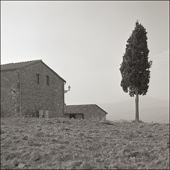 . (_Alexei) Tags: autumn bw italy white house black tree classic 120 6x6 film blanco nature field analog square landscape italia y kodak negro d76 hasselblad negative tuscany crete di scanned lone sw medium format mf 100 lantern manual toscana simple schwartz autunno weiss developed f28 f4 yf planar tuscan agriturismo 80mm 500cm capella sonnar tmx 150mm vitaleta 100tmx senesi autaut