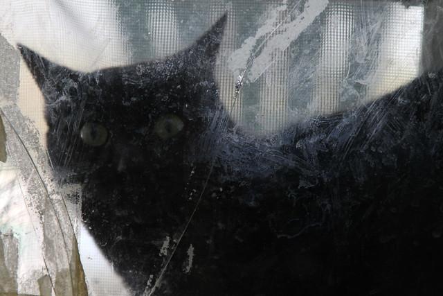 0202 a black cat