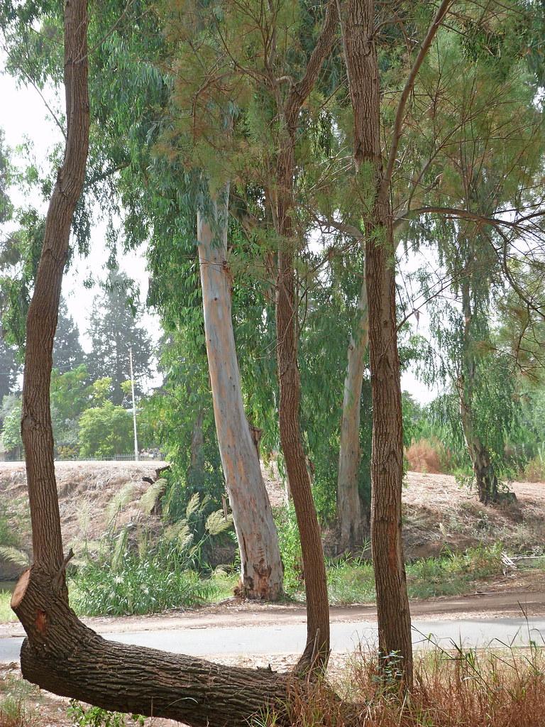 22-10-2011-tree-harp