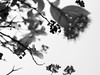 In and out of focus... (capstick13) Tags: flowers blackandwhite nature garden focus dof skyview uptothesky skyangle