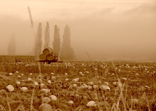 10-22-11 Pumpkin Patch by roswellsgirl