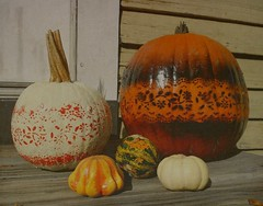 My Pumpkins ! (Maureclaire) Tags: thanksgiving art halloween gourds painting crafts pumpkins herbst herfst el artsy otoo  autunno haust  outono doorstep hst textured stenciling syksy autumncolor podzim hsten alteredimages musim sonbahar manipulatedphotos jesen efterr sz texturized lautomne  turnersfallsma  gugur jesieni   jeseni decoratedpumpkins autumncrafts ringexcellence