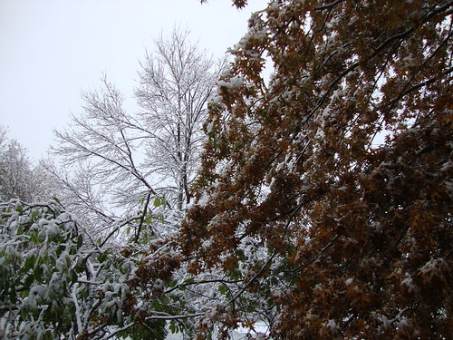 snow on my birthday, 10/29/11