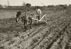 NRCSDC01012 (USDAgov) Tags: farm farmland dustbowl farmer plowing