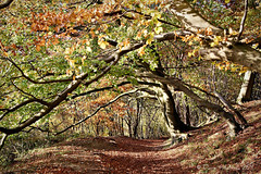 Autumn Forest (Dave Hilditch Photography) Tags: autumn trees ngc tring hertfordshire theridgeway footpaths topshots mywinners abigfave alberoefoglia natureselegantshots saariysqualitypictures fleursetpaysages
