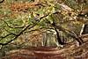 Autumn Forest (Dave Hilditch Photography) Tags: autumn trees ngc tring hertfordshire theridgeway footpaths topshots mywinners abigfave alberoefoglia natureselegantshots saariysqualitypictures fleursetpaysages