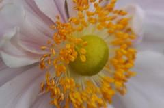 Macro Flower (ianharrywebb) Tags: flowers autumn iansdigitalphotos yahoo:yourpictures=wildlife yahoo:yourpictures=nature