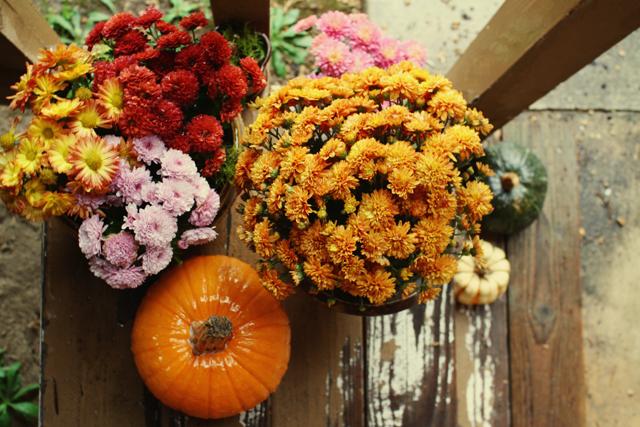 {autumn} hues #2