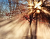 Cold Morning Sun - secret revealed :-) (janusz l) Tags: morning autumn trees sun cold tree fall colors leaves fog colours richmond rays hdr blueribbonwinner janusz leszczynski 234652