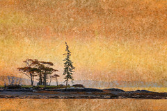 Mount Desert Island, Maine (Greg from Maine) Tags: ocean trees reflection tree texture bay nationalpark maine newengland barharbormaine textured barharbor mountdesertisland mdi acadianationalpark texturized westernbay
