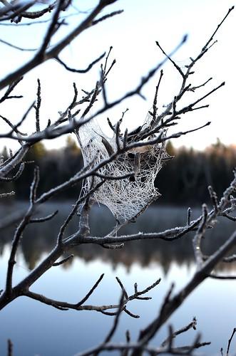 frosty web_125
