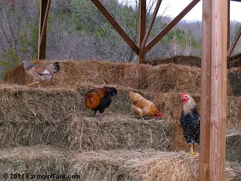 Hay inspectors 1 - FarmgirlFare.com