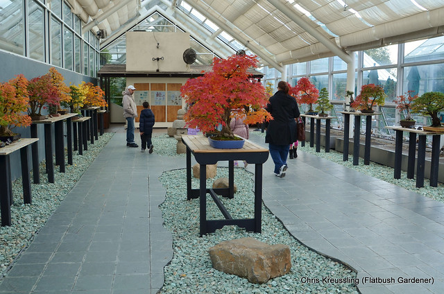 Bonsai Museum, BBG