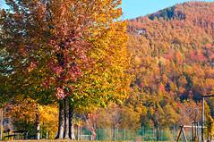 Parco Giochi (Madmilox) Tags: autumn red italy parco sun color tree verde green leaves playground yellow foglie nikon italia day quiet giallo sole albero autunno rosso colori calma giochi giornata pievepelago d5000