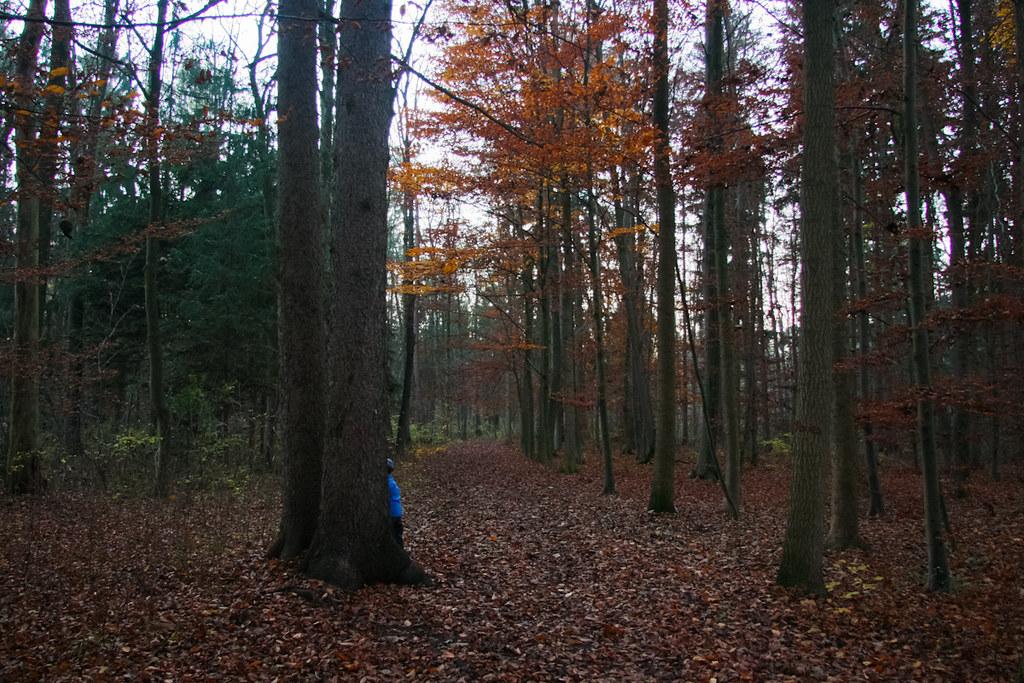 Waldsuchbild