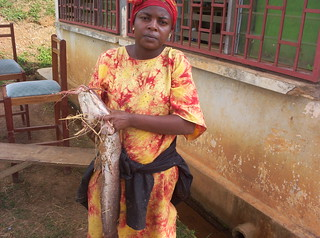 Catfish, Cameroon. Photo by Randall Brummett, 2003