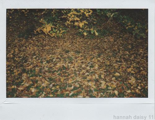 late autumn leaves 2