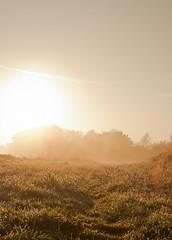 Morning III (180Pixel) Tags: morning fog 35mm badoeynhausen eos400d