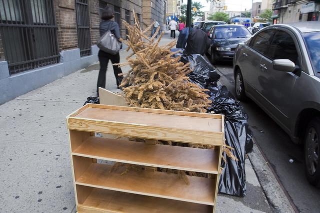 365.29 Dead Christmas Tree in September