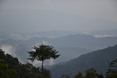 Cloudy and chilly (Christophe Maerten) Tags: cloud forest highlands hill malaysia fraser bukit peninsular maleisi schiereiland nevelwoud malaysiathailand2011
