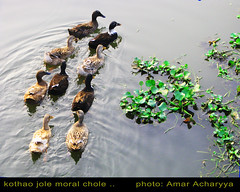 jay bhese jay apon mone .. (dento_eyewishflickr) Tags: pond excellent ducts