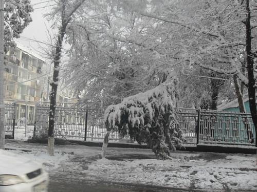 Последствия снегопада в Курган-тюбе (14)
